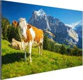 Zwitserse Koeien Aluminium 60x40 cm - Foto print op Aluminium (metaal wanddecoratie)