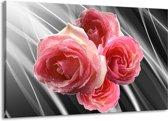 Canvas schilderij Roos   Grijs, Roze   140x90cm 1Luik