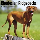 Rhodesian Ridgeback Kalender 2020