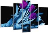 Glasschilderij Tulp   Paars, Blauw, Zwart   170x100cm 5Luik   Foto print op Glas    F003915