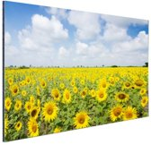 Zonnebloemen veld  Aluminium 30x20 cm - Foto print op Aluminium (metaal wanddecoratie)
