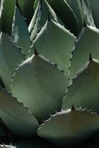 Agave Leaves Journal