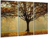 Glasschilderij Boom | Grijs, Bruin, Zwart | 120x80cm 3Luik | Foto print op Glas |  F001543