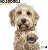 Goldendoodle Kalender 2020 Modern