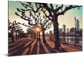 Zonsondergang tussen de bomen in Frankfurt am Main Aluminium 180x120 cm - Foto print op Aluminium (metaal wanddecoratie) XXL / Groot formaat!