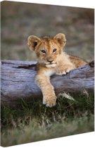 Leeuwenwelp liggend op log Canvas 60x80 cm - Foto print op Canvas schilderij (Wanddecoratie)