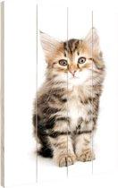 Jong grijs katje Hout 20x30 cm - Foto print op Hout (Wanddecoratie)