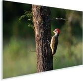 Grondspecht in Lake Mburo National park Plexiglas 30x20 cm - klein - Foto print op Glas (Plexiglas wanddecoratie)