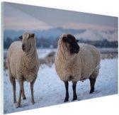 Twee schapen in de sneeuw Glas 90x60 cm - Foto print op Glas (Plexiglas wanddecoratie)