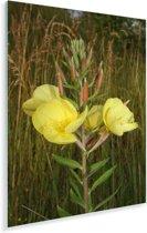 Een gele teunisplant in de natuur Plexiglas 80x120 cm - Foto print op Glas (Plexiglas wanddecoratie)