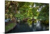 Bomen in de wateren van het Nationaal park Lago de Camécuaro Aluminium 90x60 cm - Foto print op Aluminium (metaal wanddecoratie)