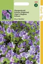Hortitops Zaden - Echium Plantagineum Blue Bedder
