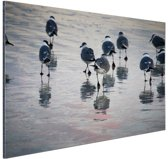 Meeuwen in het water Aluminium 120x80 cm - Foto print op Aluminium (metaal wanddecoratie)