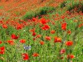 Papermoon Red Poppa Field Vlies Fotobehang 200x149cm 4-Banen
