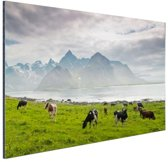 Koeien met bergen Aluminium 60x40 cm - Foto print op Aluminium (metaal wanddecoratie)