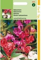 Balsamien - Impatiens balsamina - set van 10 stuks