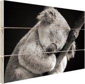 Een slapende koala Hout 80x60 cm - Foto print op Hout (Wanddecoratie)