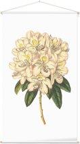 Textielposter Botanisch Rododendron Aquarel 2 (Rhododendron) - 60 x 105 cm