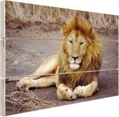 Liggende leeuw in Afrika Hout 80x60 cm - Foto print op Hout (Wanddecoratie)