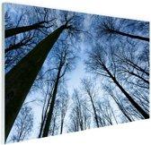Beukenbos in de winter blauwe lucht Glas 30x20 cm - Foto print op Glas (Plexiglas wanddecoratie)