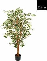 Mica Decorations ficus hawaii maat in cm: 150 x 75 groen bont in plastic pot