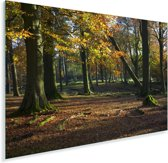 Herfstkleurige bomen in het Nationaal park Peak District in Engeland Plexiglas 30x20 cm - klein - Foto print op Glas (Plexiglas wanddecoratie)