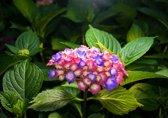 Fotobehang Bloemen | Groen | 416x254