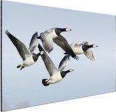 Vier ganzen in de lucht Aluminium 180x120 cm - Foto print op Aluminium (metaal wanddecoratie) XXL / Groot formaat!
