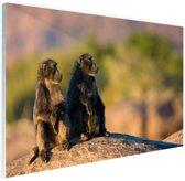 Bavianenfamilie op de uitkijk Glas 90x60 cm - Foto print op Glas (Plexiglas wanddecoratie)