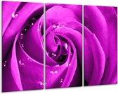 Glasschilderij Roos | Paars | 120x80cm 3Luik | Foto print op Glas |  F003597
