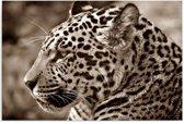 Schilderij - Jaguar
