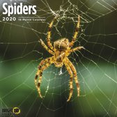 Spinnen Kalender 2020