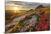 Roze bloemen op het heuvellandschap van het Nationaal park Dartmoor Aluminium 180x120 cm - Foto print op Aluminium (metaal wanddecoratie) XXL / Groot formaat!