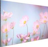 Prachtige lichtroze bloemen Aluminium 90x60 cm - Foto print op Aluminium (metaal wanddecoratie)