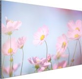 FotoCadeau.nl - Prachtige lichtroze bloemen Aluminium 90x60 cm - Foto print op Aluminium (metaal wanddecoratie)