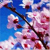Outdoor Canvas Schilderij - Bloemen Bloesem