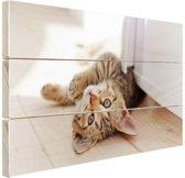 Spelende kitten Hout 80x60 cm - Foto print op Hout (Wanddecoratie)