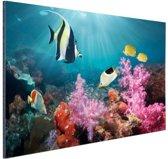 Kleurig koraal Aluminium 120x80 cm - Foto print op Aluminium (metaal wanddecoratie)