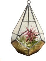 Diamant terrarium met airplants