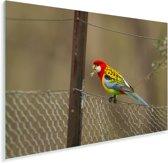 Kleurrijke parkiet op een hek Plexiglas 90x60 cm - Foto print op Glas (Plexiglas wanddecoratie)