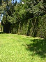 Venijnboom Taxus baccata 180-200 cm, 8x haagplant, incl. bezorging