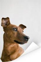 Foto van een wegkijkende Dwergpinscher Poster 120x180 cm - Foto print op Poster (wanddecoratie woonkamer / slaapkamer) / Huisdieren Poster XXL / Groot formaat!