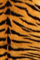 Notebook: Lined Journal - Tiger Notebook - Notebook Featuring Tiger Fur