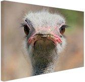 Struisvogel Portret van voren Canvas 80x60 cm - Foto print op Canvas schilderij (Wanddecoratie woonkamer / slaapkamer) / Dieren Canvas Schilderijen