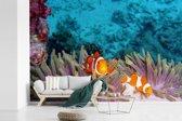 Fotobehang vinyl - Clown vissen in een anemoon in de heldere zee bij Thailand breedte 420 cm x hoogte 280 cm - Foto print op behang (in 7 formaten beschikbaar)