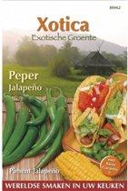 Peper Jalapeno (Exoot) Capsicum annuum - set van 7 stuks