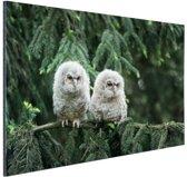 Twee uilskuikens Aluminium 90x60 cm - Foto print op Aluminium (metaal wanddecoratie)