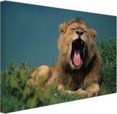 Gapende leeuw Canvas 120x80 cm - Foto print op Canvas schilderij (Wanddecoratie woonkamer / slaapkamer) / Dieren Canvas Schilderij