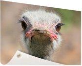 Struisvogel Portret van voren Tuinposter 200x100 cm - Tuindoek / Buitencanvas / Schilderijen voor buiten (tuin decoratie) XXL / Groot formaat!
