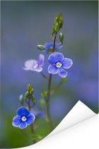 Paarse bloemen van de lange ereprijs met een wazige achtergrond Poster 60x90 cm - Foto print op Poster (wanddecoratie woonkamer / slaapkamer)